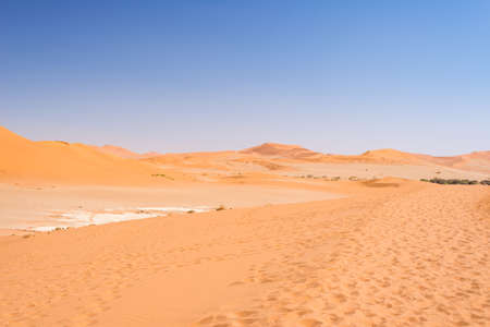 Photo for Sand dunes Namib desert, salt flat, roadtrip in the wonderful Namib Naukluft National Park, travel destination in Namibia, Africa.  - Royalty Free Image