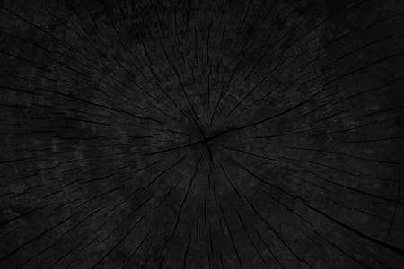 Foto de Burned wood texture of pruned tree - Imagen libre de derechos