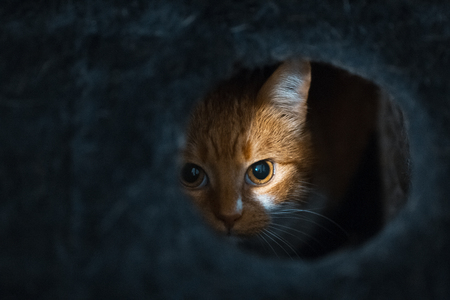 Foto de Portrait of cute red white cat hiding of black box. - Imagen libre de derechos