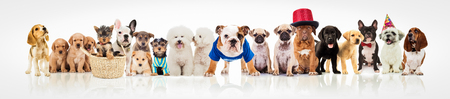 Foto de large group of dogs on white background, different breeds and sizes, some of them wearing clothes, hats and costumes - Imagen libre de derechos