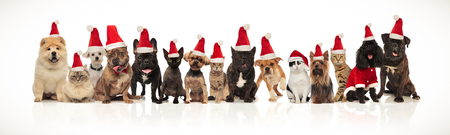 happy santa cats and dogs panting while sitting and standing on white background