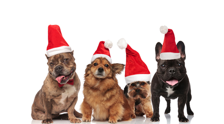 group of four santa dogs of different breeds panting while standing and sitting on white background