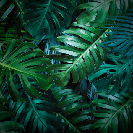 Photo for Tropical leaves background - Royalty Free Image