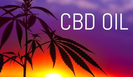 Photo pour CBD oil, Cannabidiol. Medical cannabis. Growing premium marijuana product. Natural cannabis. - image libre de droit
