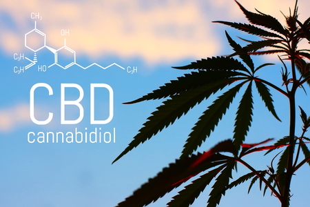 Photo pour Medical Marijuana and Cannabidiol CBD Oil chemical formula. Growing premium cannabis products. Influence (positive and negative) of smoking marijuana on human brain, nervous system, mental activity and functions, cognitive functioning, development. Thematic photo hemp - image libre de droit