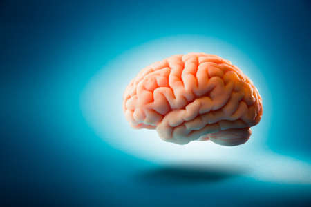 Foto de Human brain floating on a blue background - Imagen libre de derechos