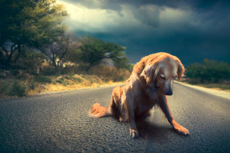 Photo pour abandoned dog in the middle of the road / high contrast image - image libre de droit