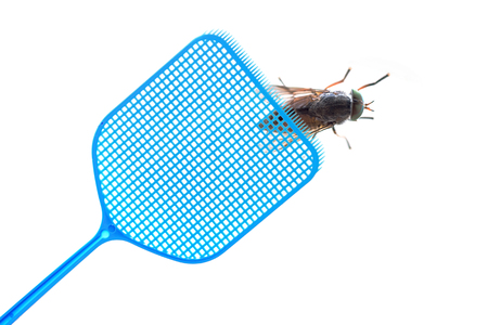 Foto de Blue flyswatter is hunting a dark giant horsefly, isolated on a white background, copy space - Imagen libre de derechos