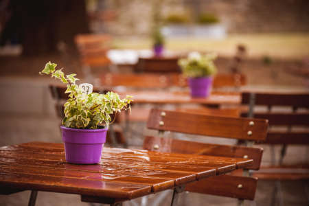 flowers in pot on a wet cafe table after rain