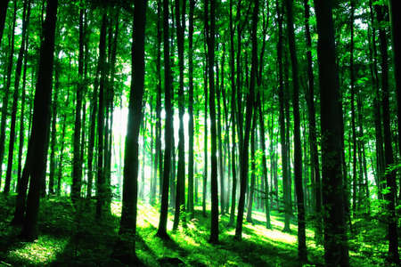 Photo for Sunshine in the green forest - Royalty Free Image
