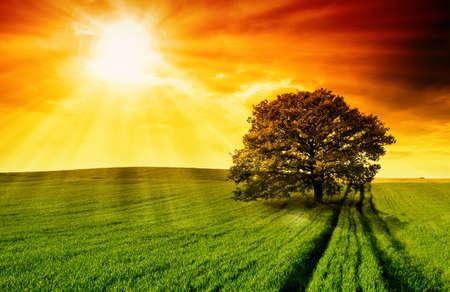 Foto de Lonely tree against a blue sky at sunset.  - Imagen libre de derechos