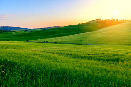 Foto de Summer in the fields of Tuscany in the sunset-Italy - Imagen libre de derechos