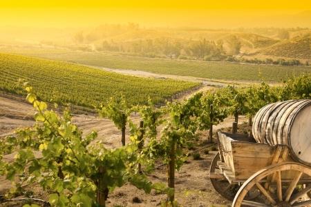 Photo pour Grape Vineyard with Vintage Barrel Carriage Wagon  - image libre de droit
