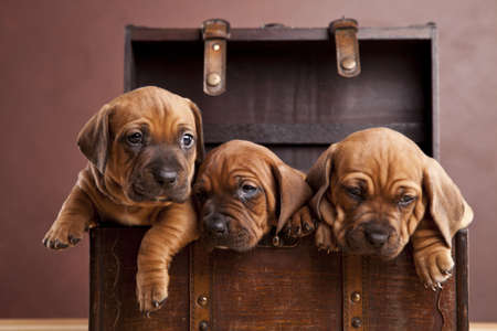 Three happy dogs in chest