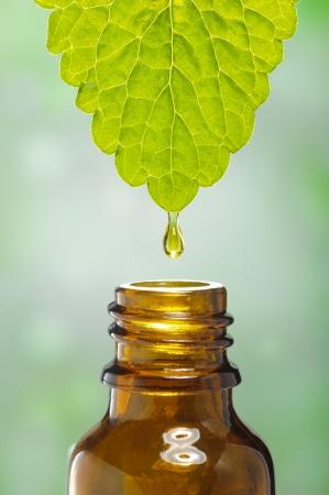 Photo pour fluid drops down from leaf as symbol for alternative herbal medicine - image libre de droit