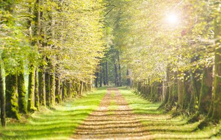 Photo for tree alley with sunbeams and path - Royalty Free Image