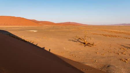 Photo for Narnib desert - Royalty Free Image