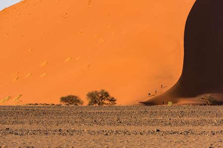Photo for desert - Royalty Free Image