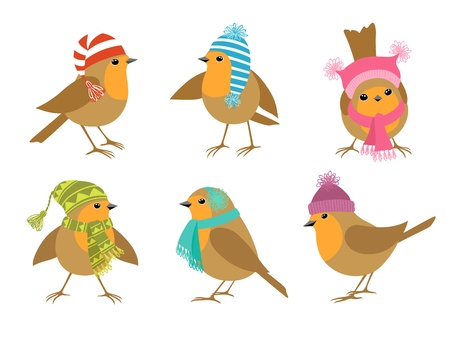 Funny Robins birds in winter hats