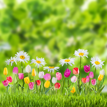 Photo for Green spring background with flowers - Royalty Free Image