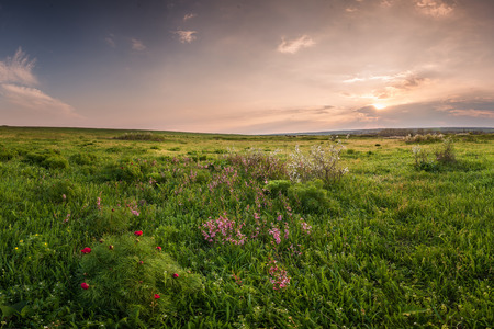 Photo pour Spring meadow with flowers on sunset - image libre de droit