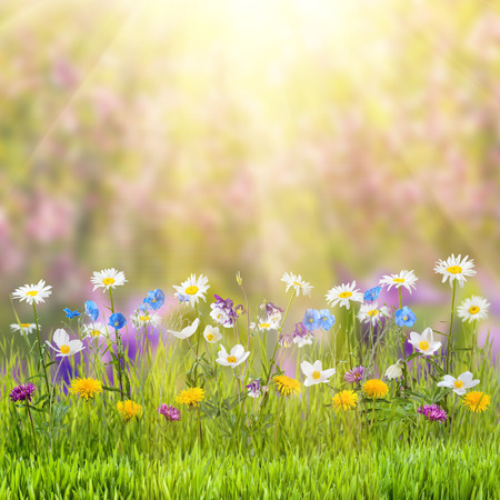 Photo pour Beautiful spring floral meadow with wild flowers - image libre de droit