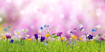 Photo pour Spring meadow with sunny wild flowers, nature background - image libre de droit