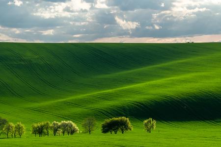 Foto de Green hills in the rays of evening sun, agricultural landscape - Imagen libre de derechos
