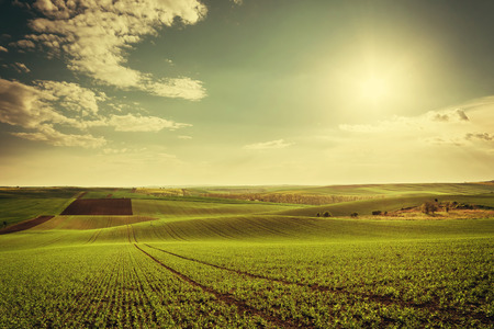 Foto de Agricultural landscape with green fields on hills and sun, vintage picture - Imagen libre de derechos