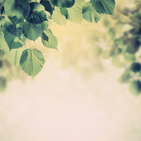 Photo for Vintage spring background with lovely flowering tree branches - Royalty Free Image