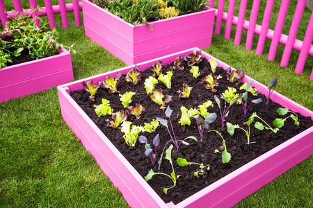 Photo pour Beautiful herb garden. Pink raised beds with herbs and vegetables - image libre de droit