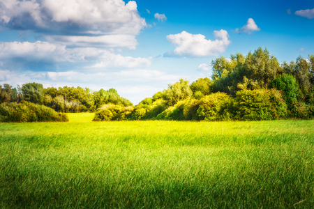 Photo for Green field with trees and blue sky. Nature landscape in summer - Royalty Free Image