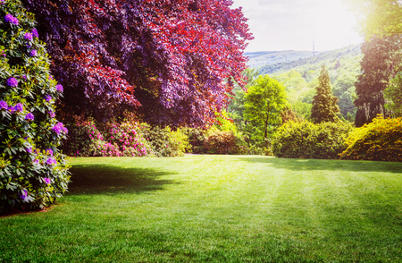 Photo for Spring park. City park with blooming rhododendron, fresh green lawn and copper beech tree. Springtime landscape background - Royalty Free Image