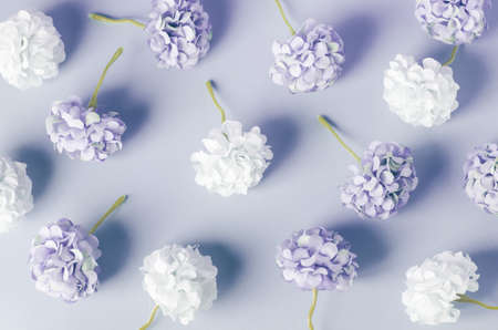 Photo for Blue and white Hydrangea flowers pattern on blue background - Royalty Free Image