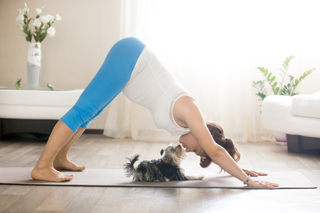 Photo pour Healthy lifestyle concept. Pregnancy Yoga and Fitness. Young pregnant yoga woman kissing cute small dog while working out in living room. Pregnant model doing prenatal downward-facing dog at home - image libre de droit