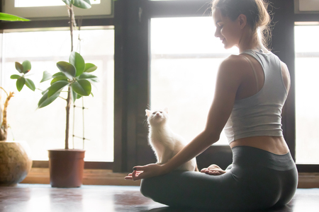 Photo pour Young attractive smiling woman practicing yoga, sitting in Half Lotus exercise, Ardha Padmasana pose, working out, wearing sportswear, grey pants, bra, indoor, home interior background, cat near her - image libre de droit