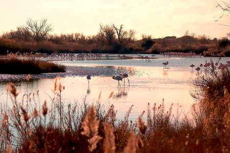 Foto de I took this picture last December 2017 at the Parc Ornithologique de Pont de Gau, within the Parc Naturel R  gional de Camargue, in the department of Bouches-du-Rh'ne, in the Provence-Alpes-C'te d 'region Azur, France. - Imagen libre de derechos