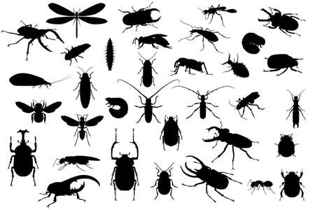 Silhouettes of different insects on white