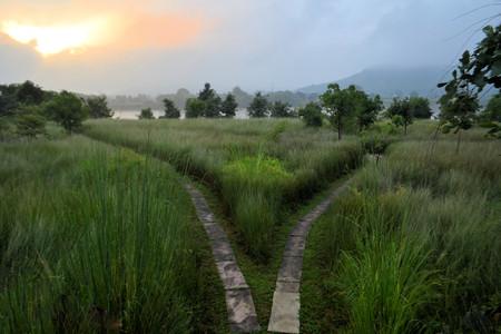 Foto de Single path splits in two directions, a fork in the road in the high grass in India - Imagen libre de derechos