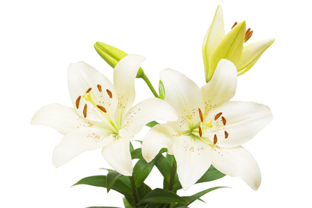 Photo pour Bouquet of beautiful delicate white lilies isolated on white background. Wedding, bride. Fashionable creative floral composition. Summer, spring. Flat lay, top view. Love. Valentine's Day - image libre de droit