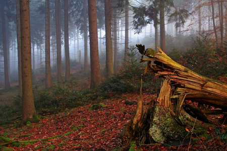Photo for herbstwald - Royalty Free Image