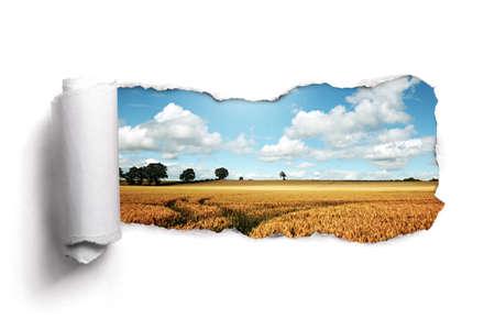 Photo pour Tearing a paper frame hole to reveal wheat field landscape - image libre de droit