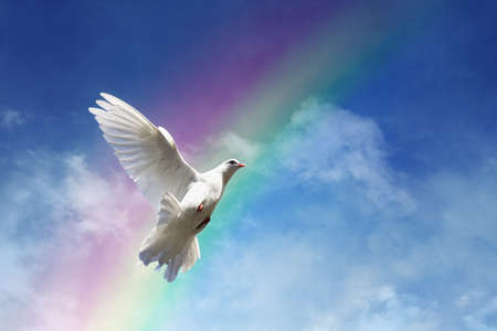 Photo pour White dove against clouds and rainbow concept for freedom, peace and spirituality - image libre de droit