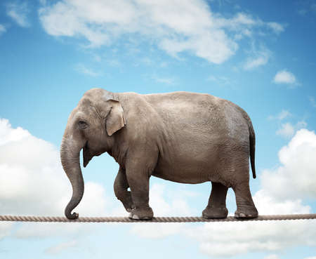 Elehant balancing on a tightrope concept for risk, conquering adversity and achievement