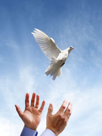 Photo for Releasing a white dove into the air concept for freedom, peace and spirituality - Royalty Free Image