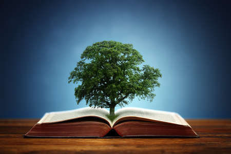 Photo for Book or tree of knowledge concept with an oak tree growing from an open book - Royalty Free Image