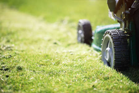 Photo for Mowing or cutting the long grass with a green lawn mower in the summer sun - Royalty Free Image