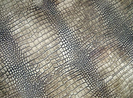 Photo pour white crocodile skin texture, abstract danger closeup - image libre de droit