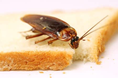 Foto de Close up of cockroach on a slice of bread  - Imagen libre de derechos