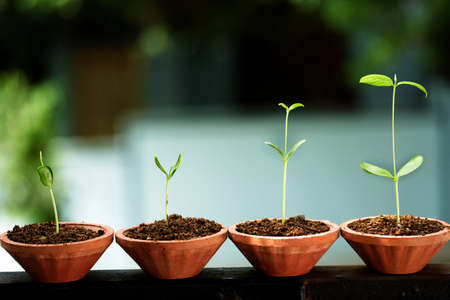 Photo pour Plant growth-Stages of the plant development  - image libre de droit